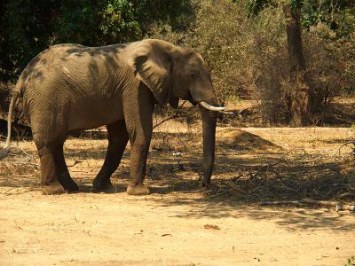 Elefantes en Mana Pools