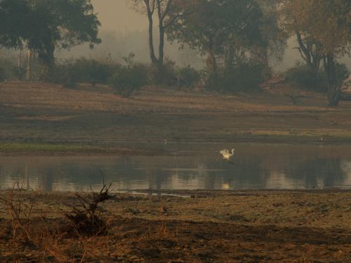 Mana Pools al amanecer