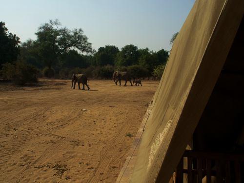 Elefantes ante nuestras tienda en Mana Pools