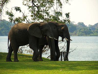 Elefantes en Tiger África
