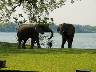 Lucha entre elefantes