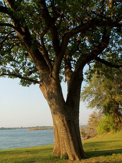 El río Zambeze grande entre los grandes