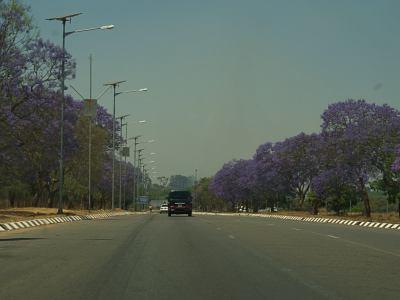 Una avenida de Harare con jacarandás violetas