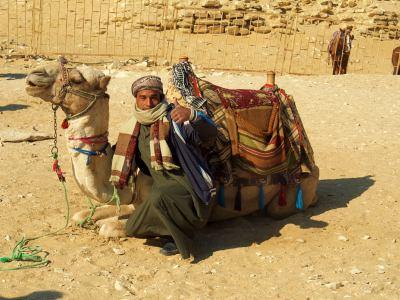 Un camello en las Pirámides de Saqqara