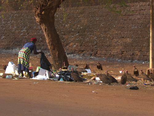 Una mujer busca comida entre buitres en Bissau
