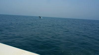 Delfines camino de la Isla de Orango