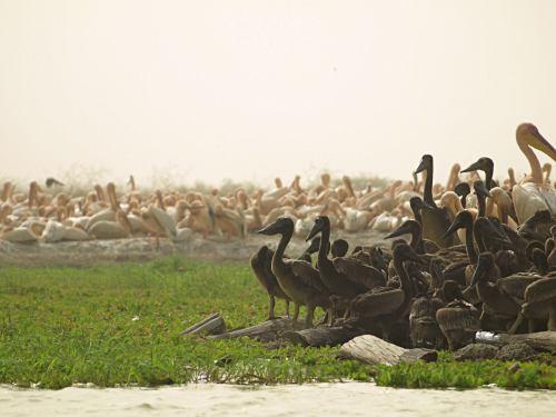 El Parque Nacional de las Aves del Djoudj