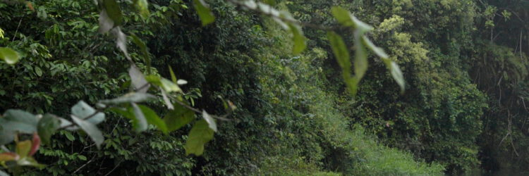 El territorio de los pigmeos de Camerún