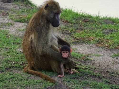 Una madre con su bebe en Chobe