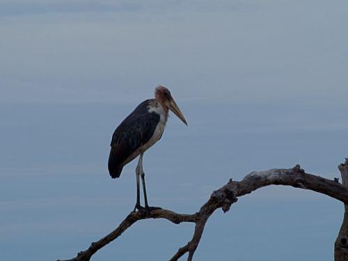 El Parque Nacional de Chobe