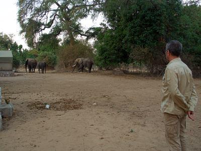 Elefantes ante nuestras narices en Zimbabue